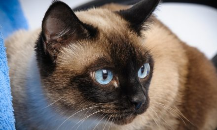 Best Small Cat Breeds for Apartment Living