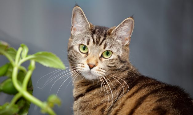 Plants & Kitties: Which Are Safe & Which Are Poisonous?