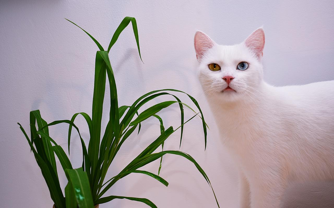 white cat with house plant