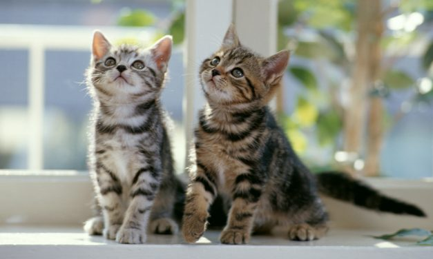 Are You Allergic to Cats? Learn About Common Cat Allergy Symptoms