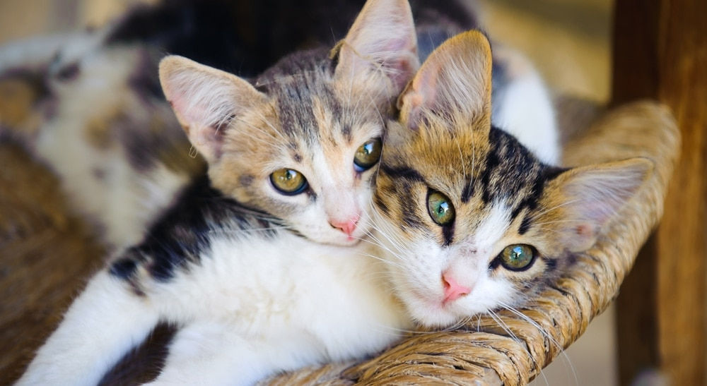Are You Allergic To Cats Learn About Common Cat Allergy