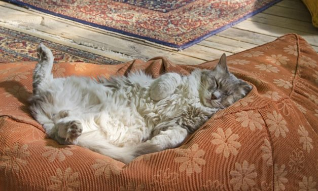 Are Cats Good For Anxiety? 4 Ways They Can Help