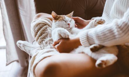 Do You Treat Your Pets Like Kids? The Fur Baby Phenomenon
