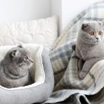 How to Clean Your Cat's Bed