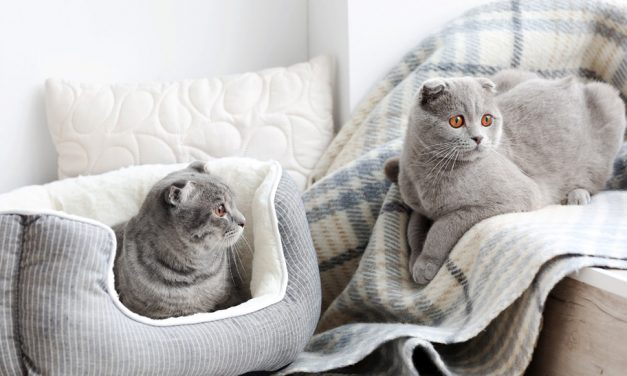 How to Clean Your Cat's Bed In 3 Simple Steps