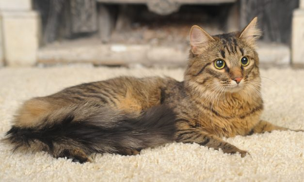 How to Stop a Cat From Peeing on the Carpet