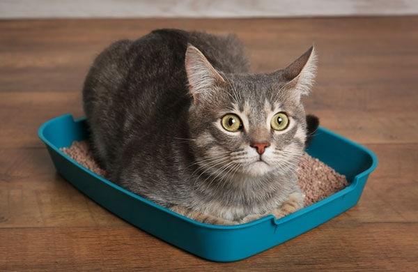 on the peeing carpet Cat