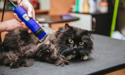 How to Remove Mats From Cat Fur (In 6 Easy Steps)