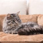 How to Remove Matted Fur on Cats