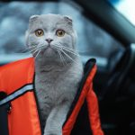 Road Trips with Your Cat