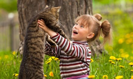 Why Do You Love Your Cat So Much: The Cat – Human Connection