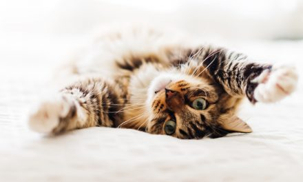 Cat Communication 101: What is My Cat Saying to Me?