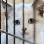Top 4 Reasons to Adopt a Shelter Cat