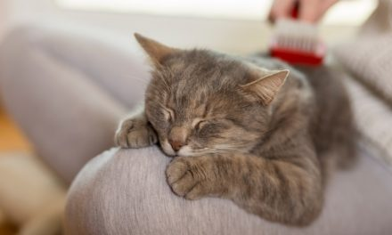Why Does My Cat Sleep on Me? Here's The Answer!