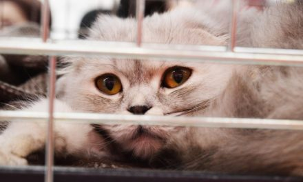 4 Amazing Reasons to Adopt A Shelter Cat