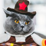 DIY Halloween Costumes for Cats