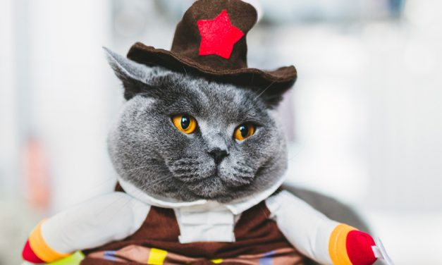 DIY Halloween Costumes for Cats (with Pictures)