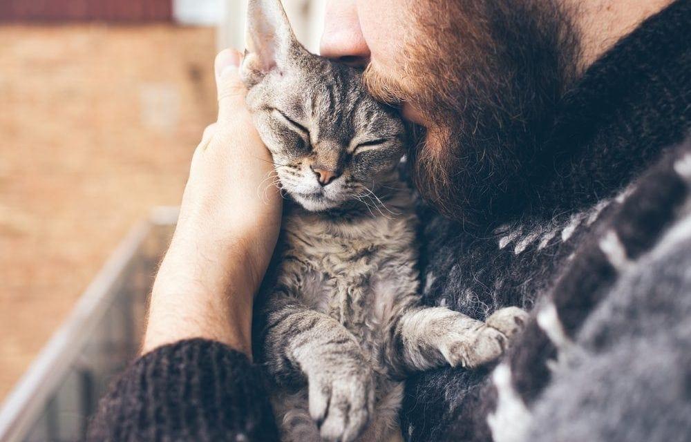 Celebrate National Cat Day – October 29, 2021