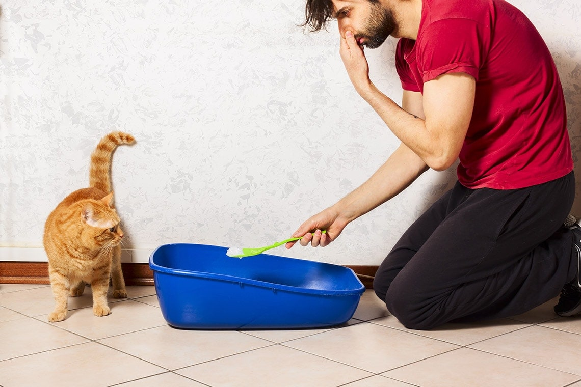 man cleaning smelly litter box