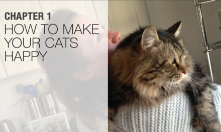 How to Make Your Cats Happy