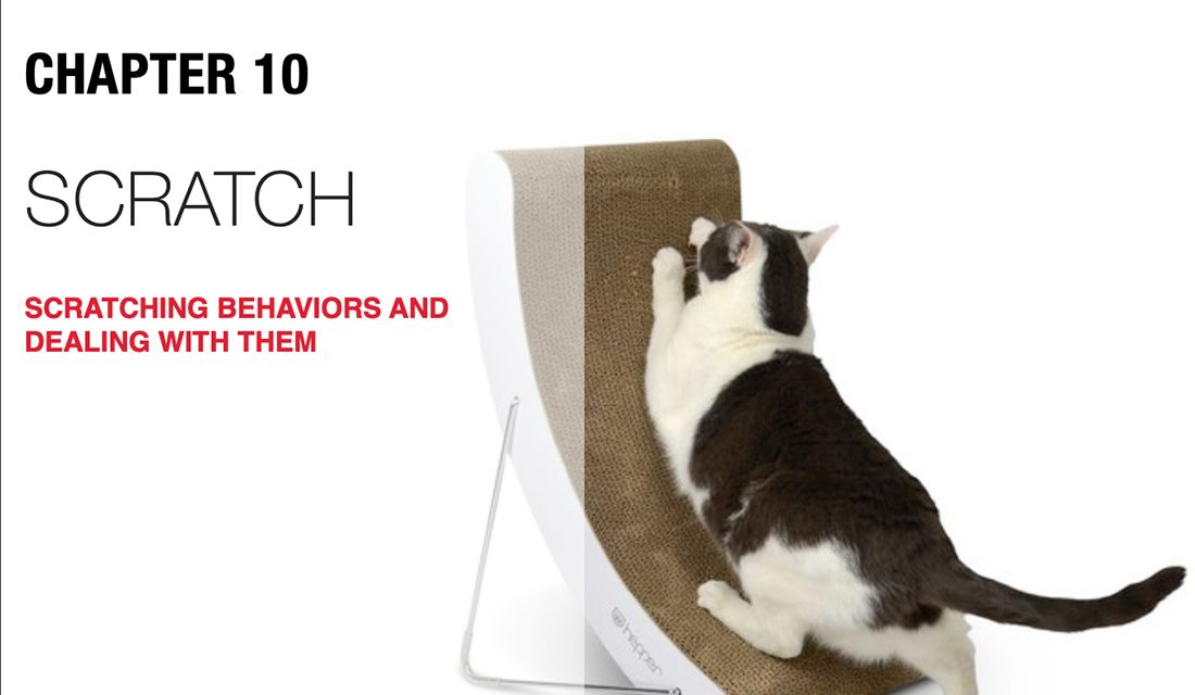 Save Your Couch from Cat Scratching