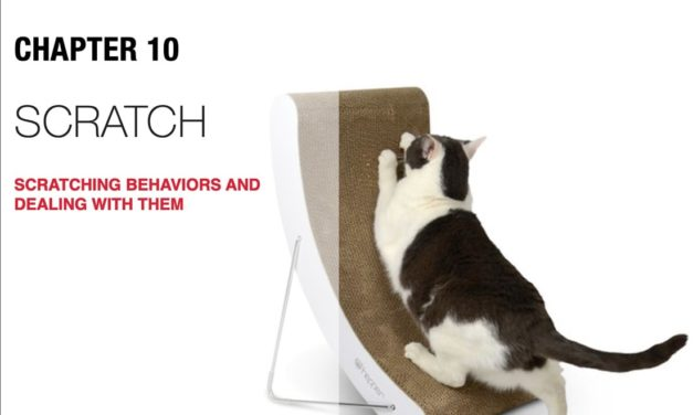 3 Ways to Save Your Couch from Cat Scratches