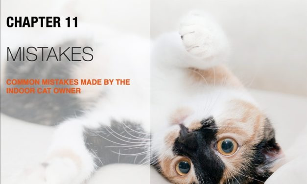 Top 6 Biggest Mistakes Made By Cat Owners