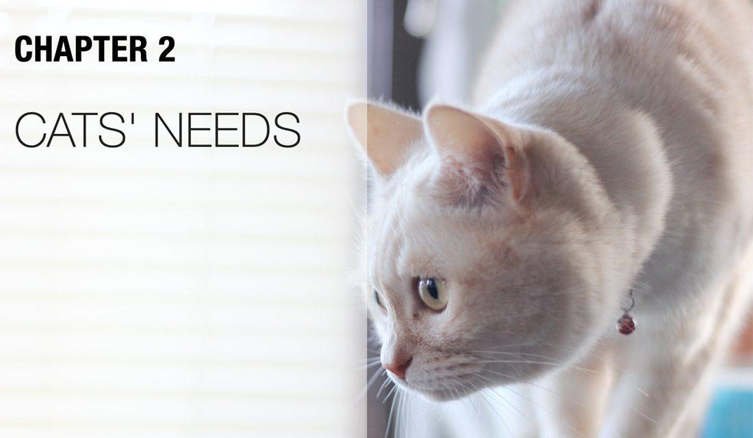 Cat's Needs
