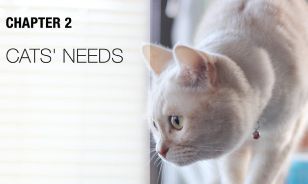 A Guide to Understanding Your Cat's Needs: Tips & Tricks