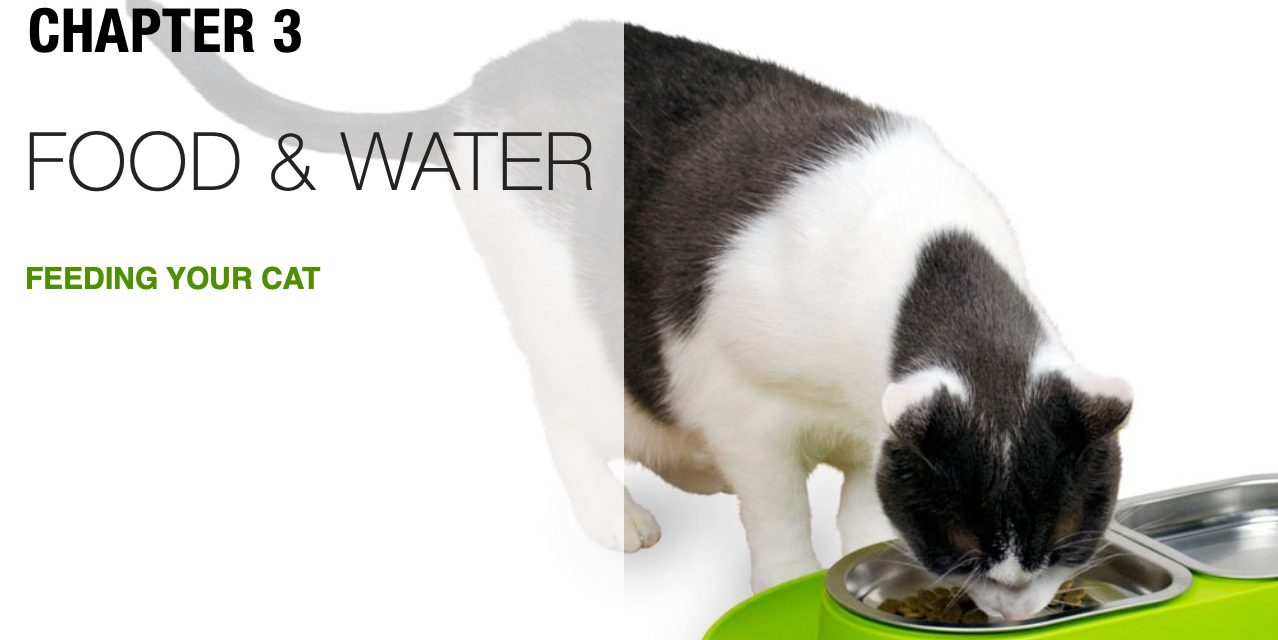 Best Food and Water Tips for Cats
