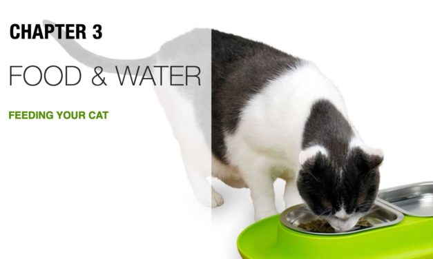 Top Tips for Feeding & Hydrating Your Cat