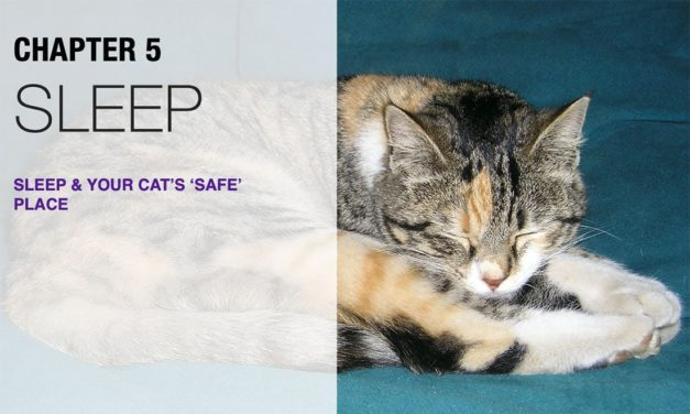 Cat Sleeping Habits & How to Create a Safe Sleep Space