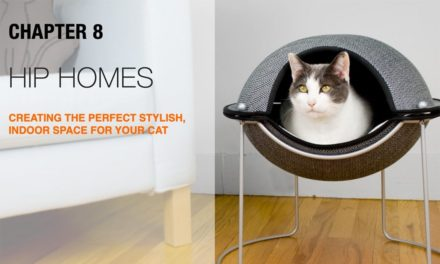 How to make a Hip Home with your Indoor Cat