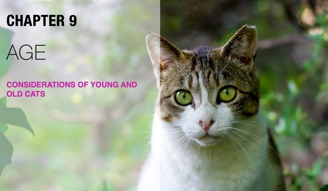 Needs of Young and Old Cats