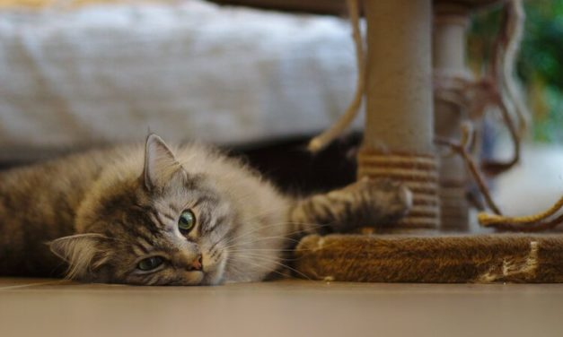 10 Ways to Get Your Cat to Use a Scratching Post