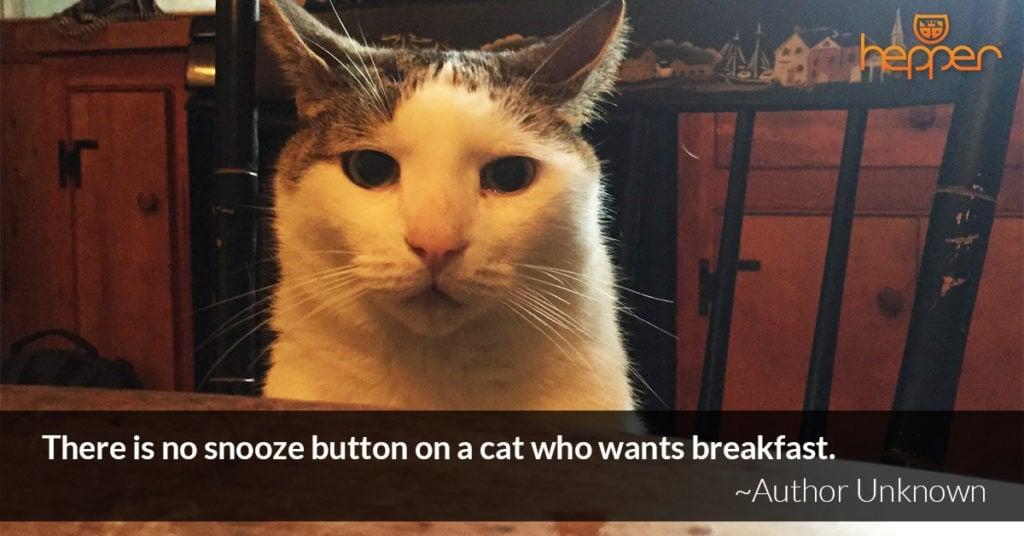 cat quote9