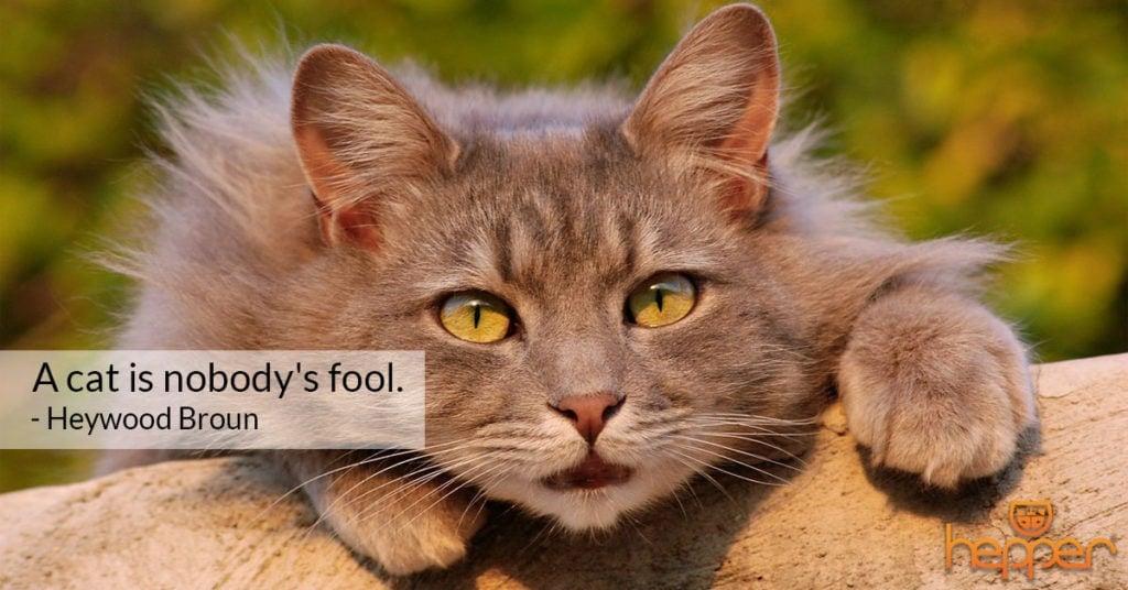 cat quote 1