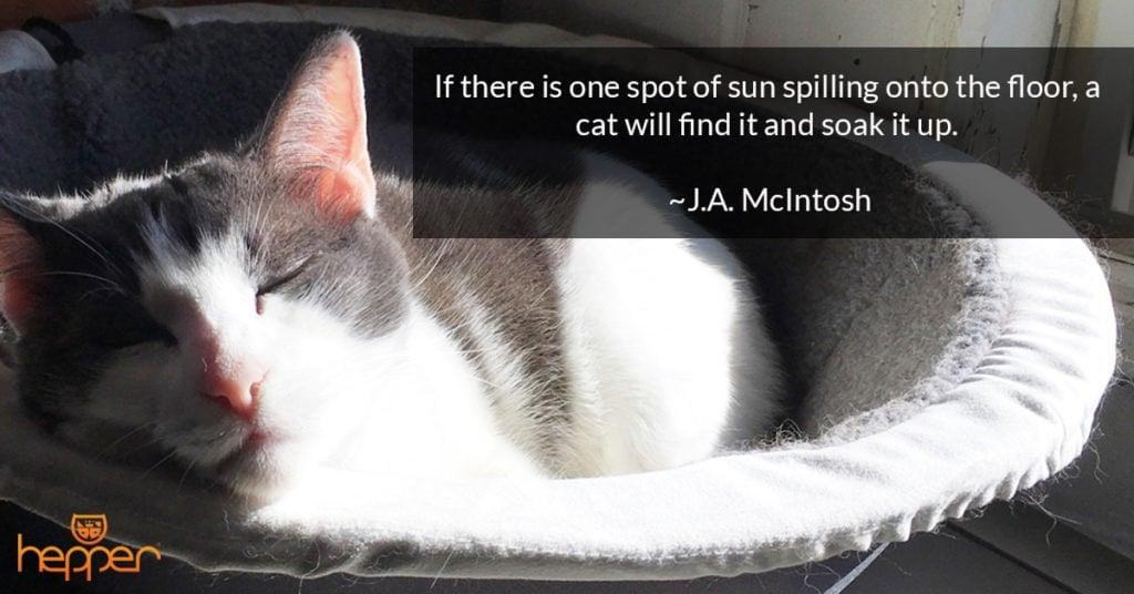 cat quote4