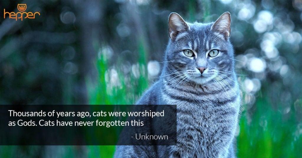 cat quote5