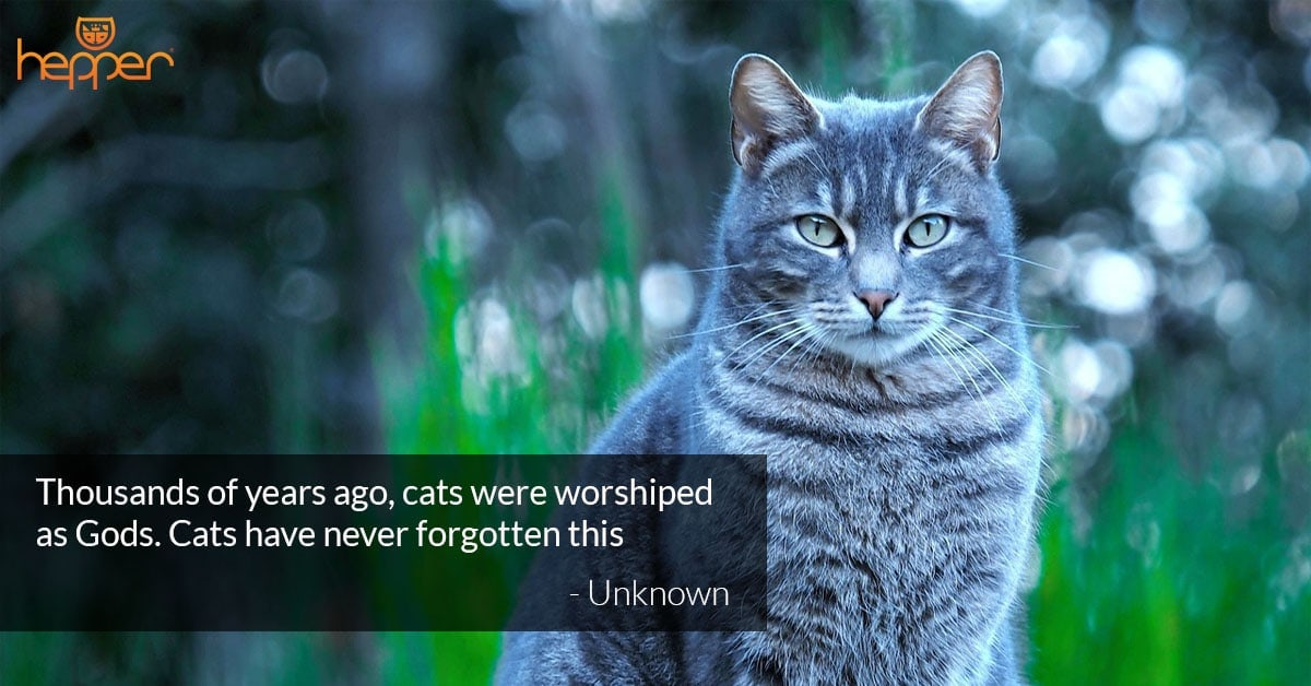 34 Best Cat Quotes – Cute, Famous, and Comical Quotes!
