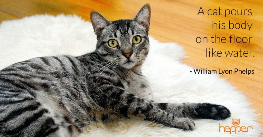 cat quote24