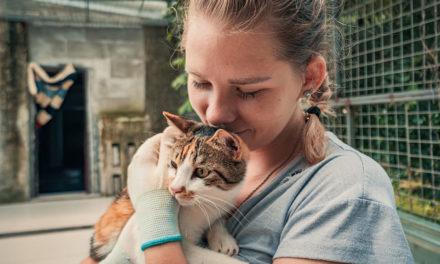 14 Best Animal Charities to Donate to