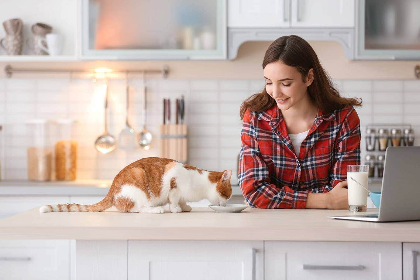 cat eating with teenager