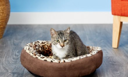 10 Best Cat Beds in 2021 – Reviews & Top Picks