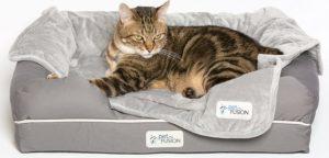 cat in PetFusion Ultimate Orthopedic Cat Bed