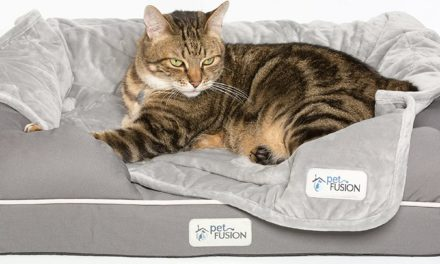 10 Best Orthopedic Cat Beds in 2021 – Reviews & Top Picks