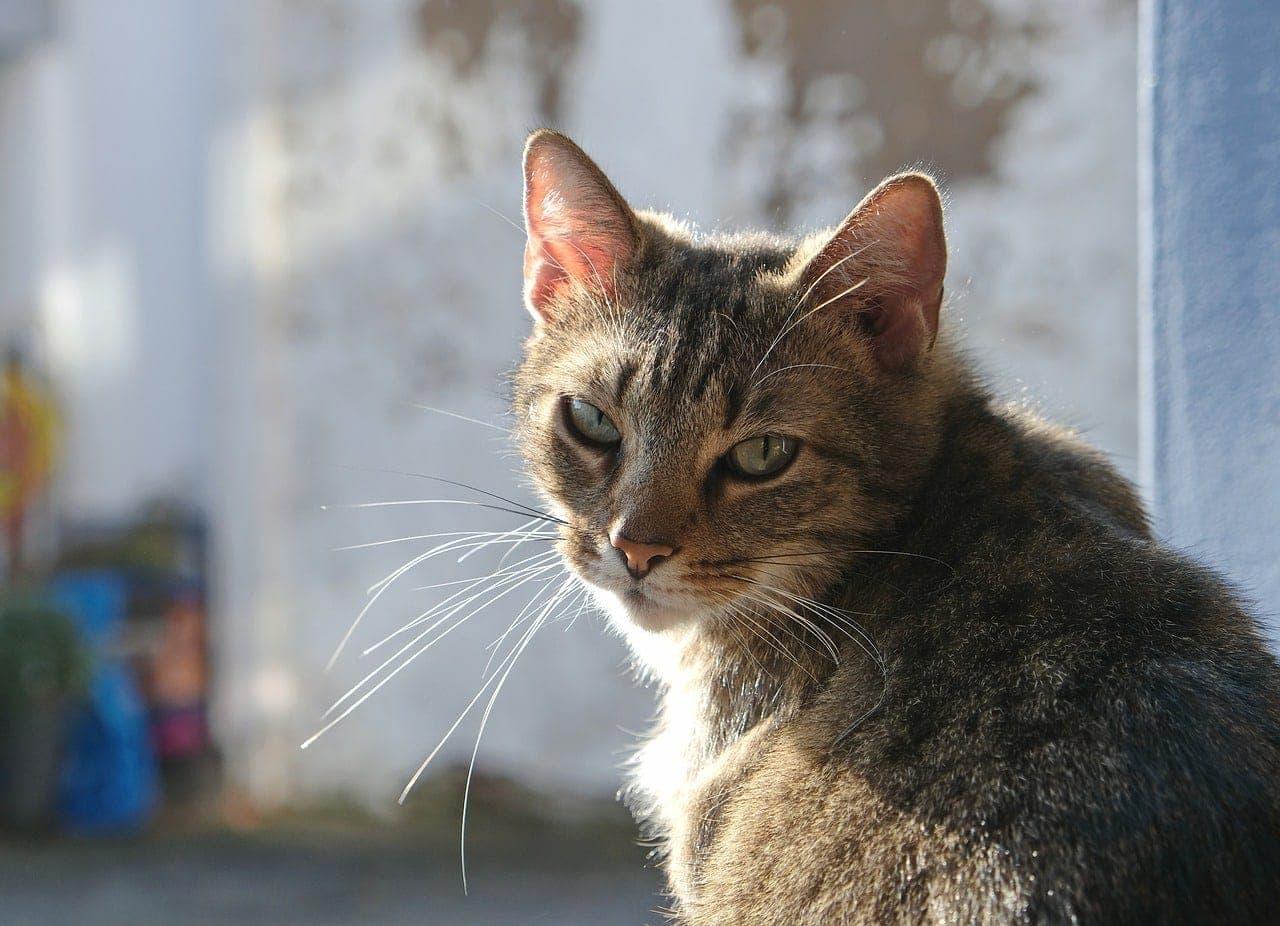 cat moody