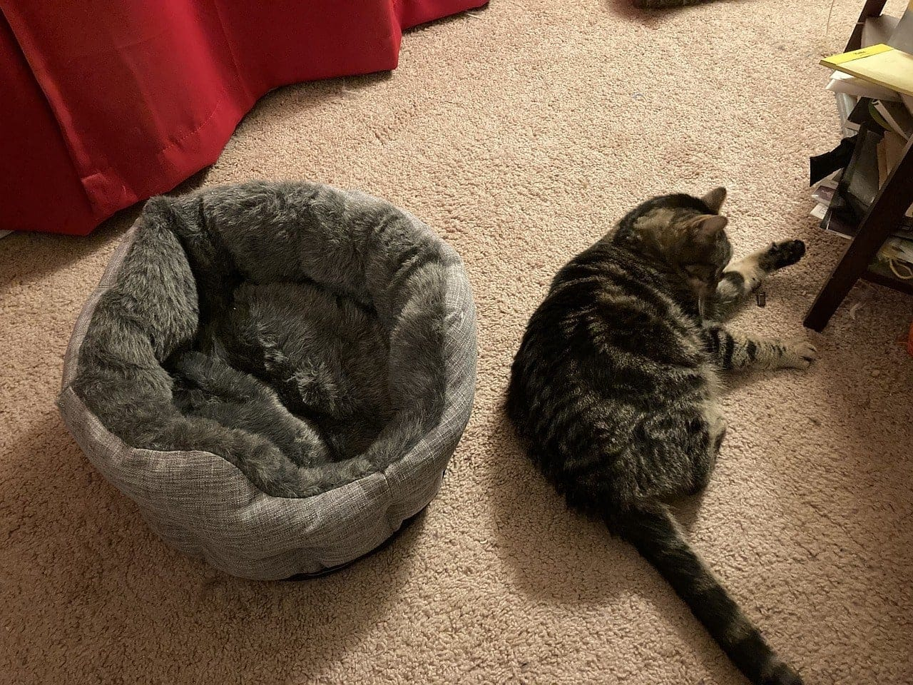 cat outside its bed