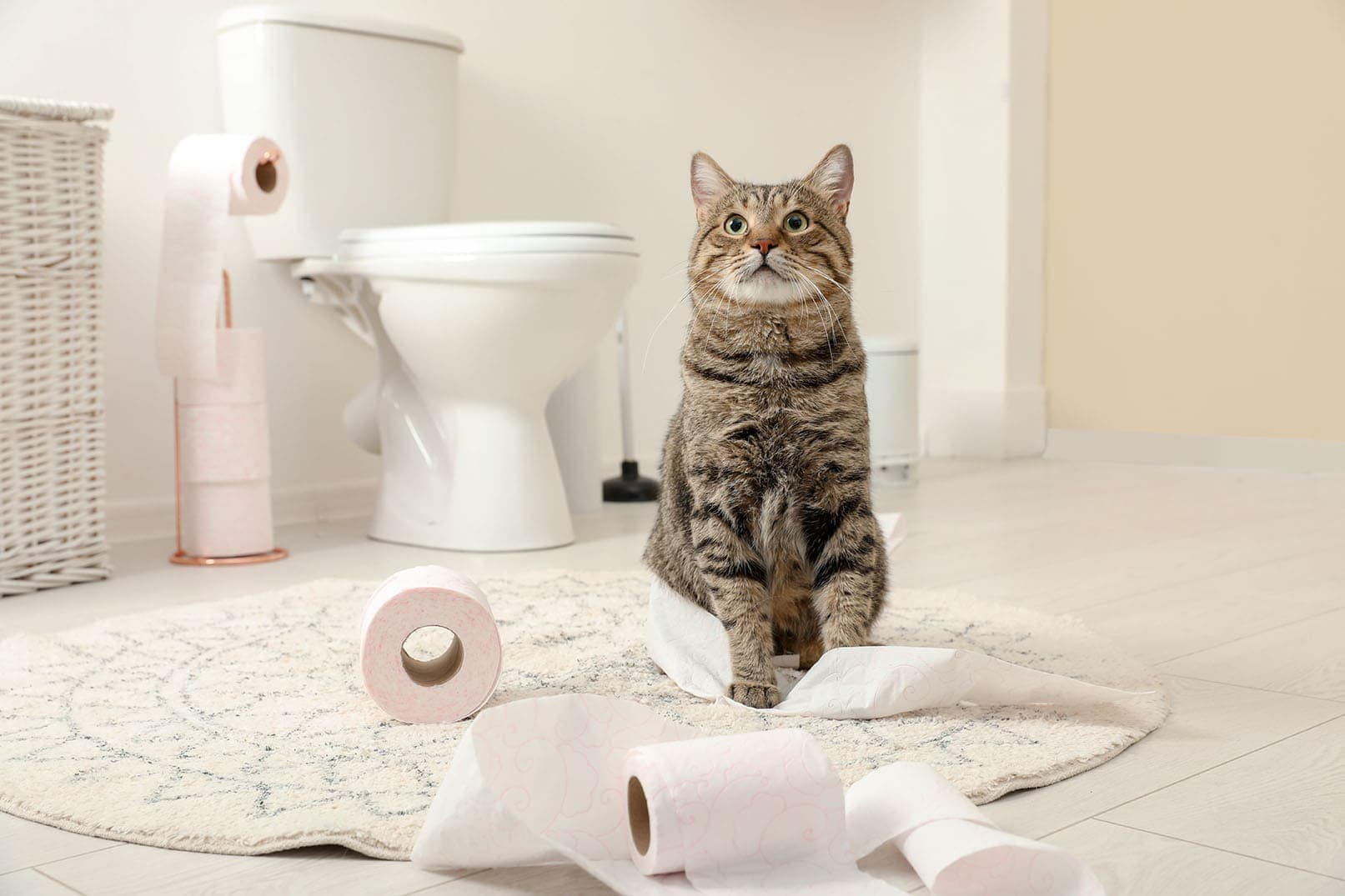 cat played with tissue rolls