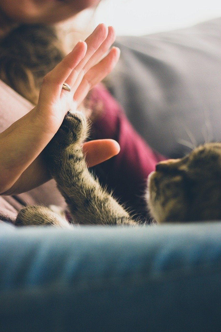 cat reaching out